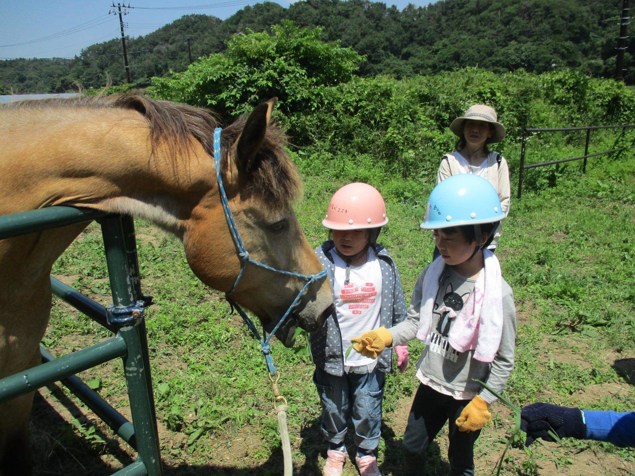 【東松島市】馬のお世話をして乗馬体験! キッズ 牧場体験プログラム【コース番号:70004】