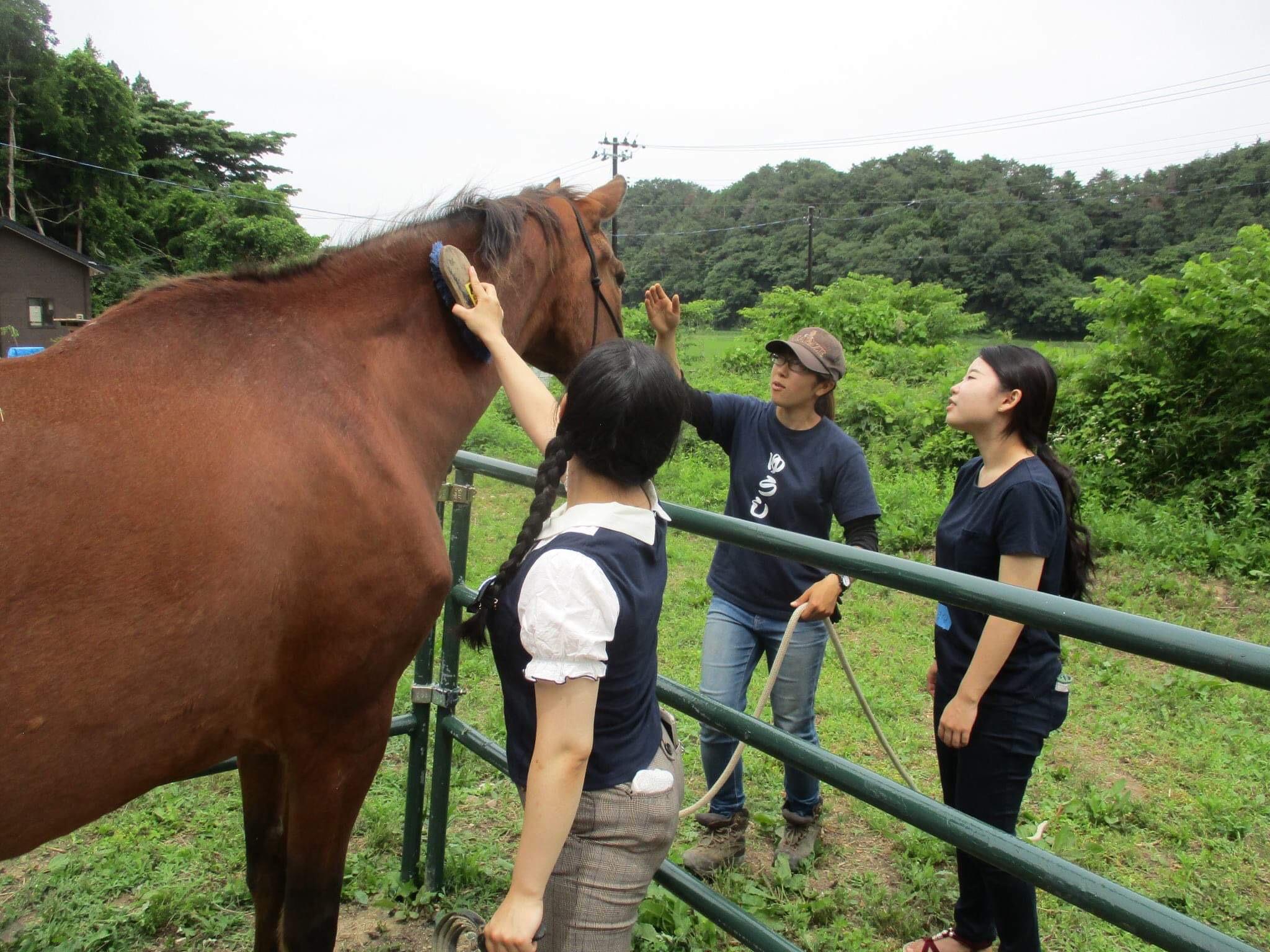 【東松島市】海街さんぽオリジナル 大人向け牧場体験プログラム【コース番号:20010】