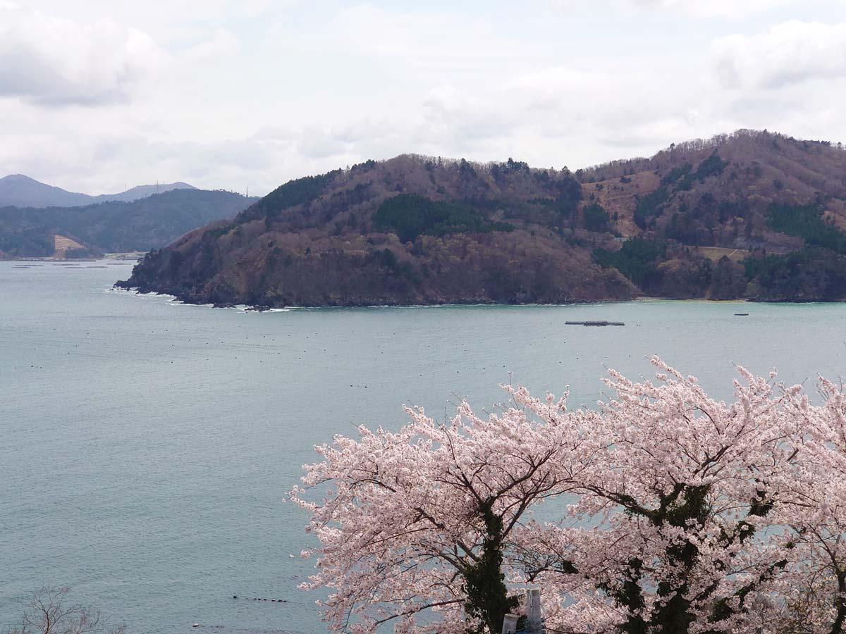 海、山、桜