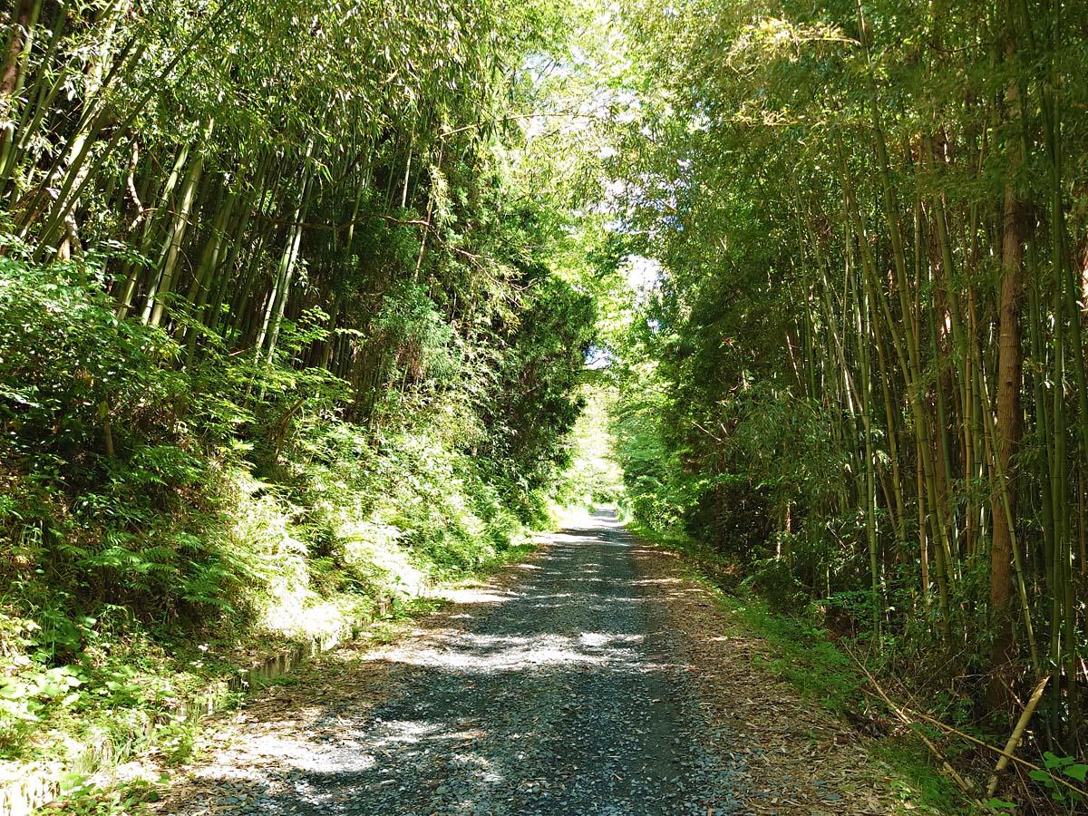 トヤケ森山山頂への道