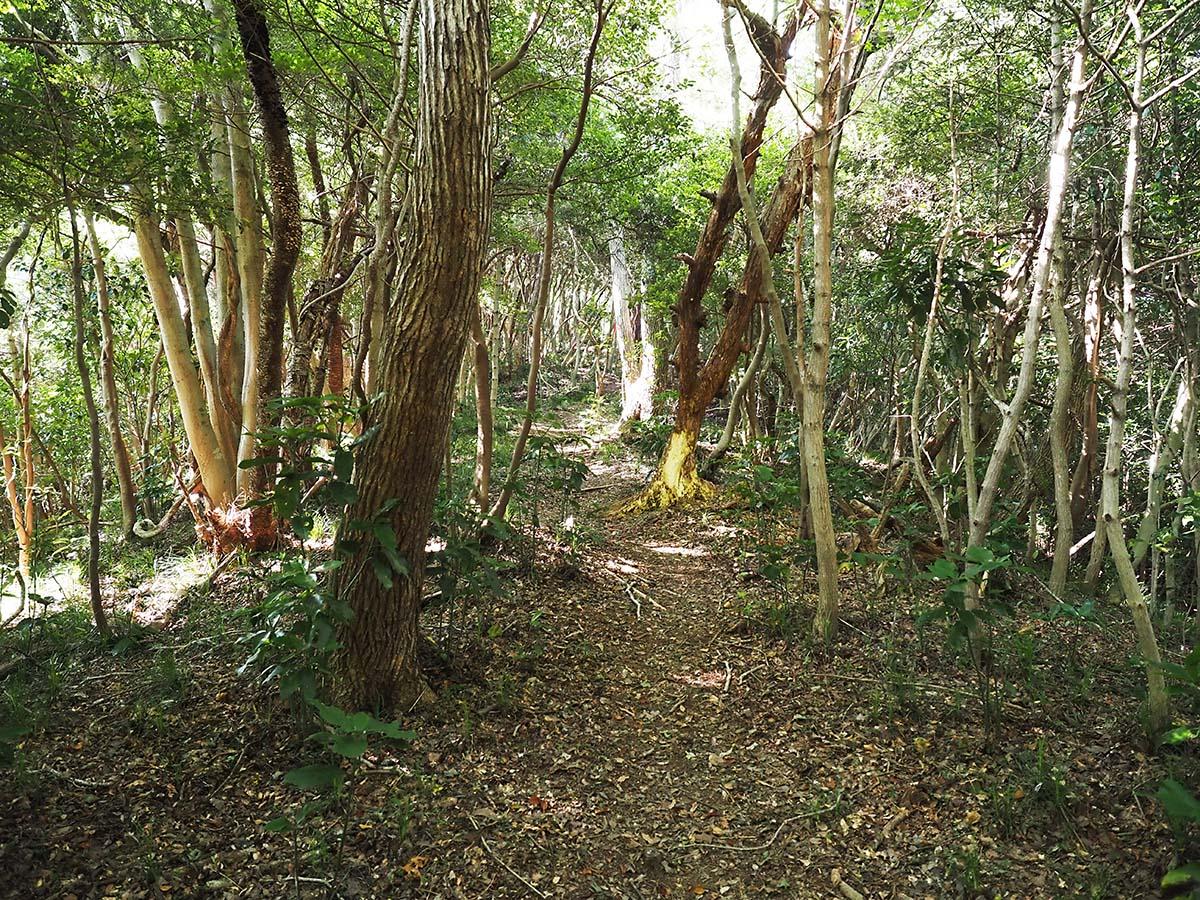 歴史を紡ぐ林道